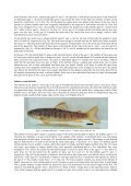 salmo salar l., 1758 - Electronic Journal of Polish Agricultural ... - Page 5