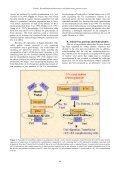 Recombinant adenoviruses and adenovirus penton vectors: from ... - Page 2