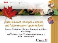 Fusarium root rot in peas - Agriculture and Rural Development