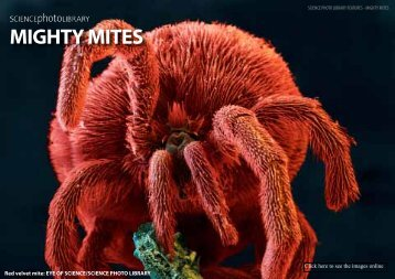 1401-Mighty-Mites