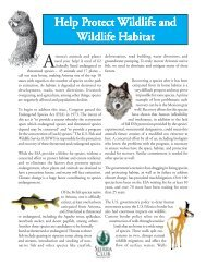 Wildlife Factsheet (102 KB pdf) - Arizona Sierra Club