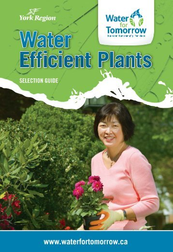 native water efficient plants - Water For Tomorrow