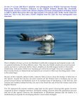 Risso's dolphins off Bardsey Island - Page 2