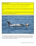 Risso's dolphins off Bardsey Island - Page 4