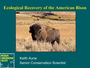 Ecological Recovery of the American Bison - Northern Rocky ...