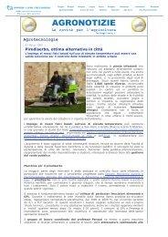 Pirodiserbo, ottima alternativa in città - Centro Interdipartimentale di ...