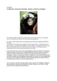 Le Bonobo, structure familiale, photos, animal à protéger - Canalblog