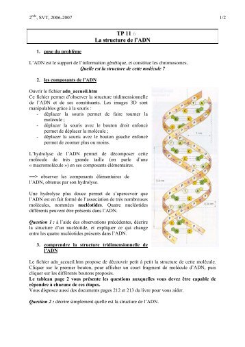 TP11 - structure ADN.. - G. Furelaud