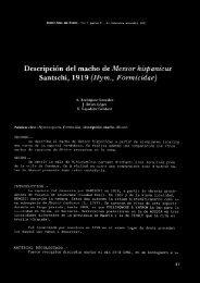 Descripción del macho de Messor Jzísfmnicus Santschi ... - CREAF