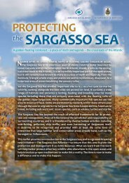 Sargasso Sea Facts - Convention on Biological Diversity