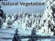 Coniferous Forests - ASKnLearn