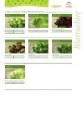 Blattsalate - frigemo - Seite 3