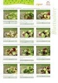 Blattsalate - frigemo - Seite 4