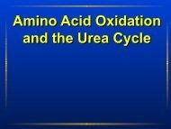 Amino Acid Oxidation and the Urea Cycle Amino Acid ... - Ecu