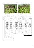 Confronto di lattughe in ciclo primaverile - Regione Campania - Page 3