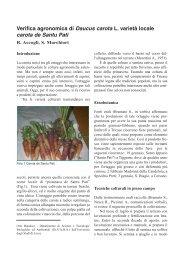 Verifica agronomica di Dacus carota L. varietà locale - Inea