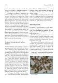 Verifica agronomica di Dacus carota L. varietà locale - Inea - Page 2