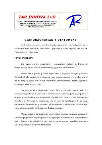 cianobacterias y diatomeas - Grupo.us.es