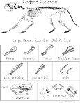 Owl Pellet Bone Sorting Chart.indd - Page 3