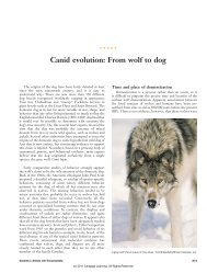Canid evolution: From wolf to dog