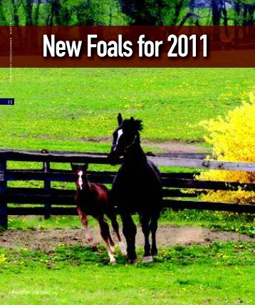 New Foals For 2011 - The Thoroughbred Breeders' Association of ...