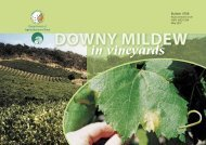 Downy mildew in vineyards - Department of Agriculture and Food