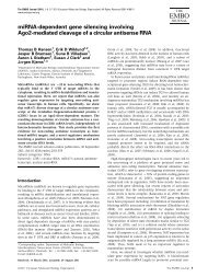 miRNA-dependent gene silencing involving Ago2-mediated ...
