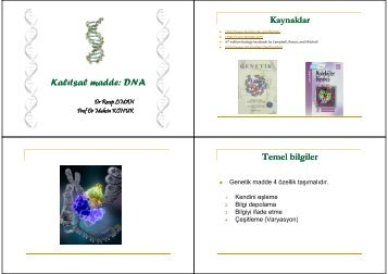 Kalıtsal madde: DNA