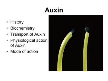 • History • Biochemistry • Transport of Auxin • Physiological action of ...