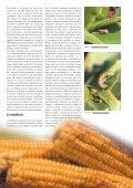 Correio 2004 - Page 7