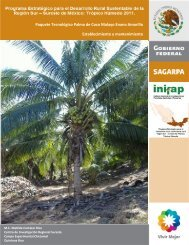 Palma de Coco Enano Malayo Establecimiento y Mantenimiento