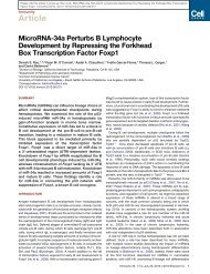 MicroRNA-34a Perturbs B Lymphocyte Development by Repressing ...