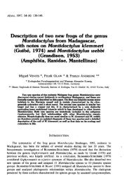 Description of two new frogs of the genus Mantidacfylus from ...