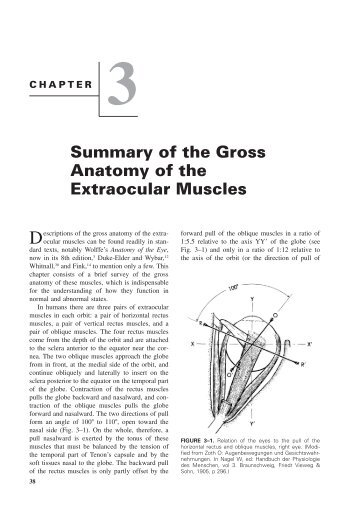 Chapter Gross Anatomy And Functions Of Skeletal Muscles