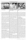 Tumörsjukdomar, del 3 Behandlingsalternativ Sol ... - Doggy Rapport - Page 2
