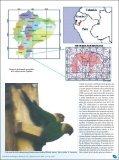 A tiriba-do pescoço-branco (Pyrrhura albipectus) - Atualidades ... - Page 2