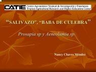 """SALIVAZO"", ""BABA DE CULEBRA Prosapia sp y Aeneolamia sp."