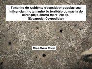 Tamanho do residente e densidade populacional ... - Ecologia