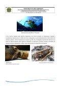 """"""" Lixo Marinho """" - Secretaria do Meio Ambiente e Recursos Hídricos - Page 7"""