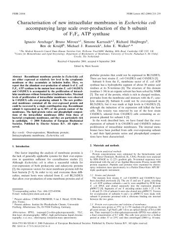 Characterisation of new intracellular membranes in Escherichia coli ...