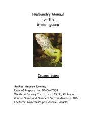 Husbandry Manual For the Green iguana - Nswfmpa.org