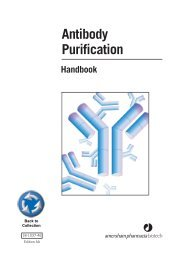 Antibody Purification - Department of Molecular and Cellular Biology