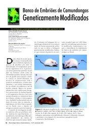 Geneticamente Modificados - Biotecnologia