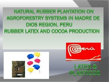 Natural rubber plantation on agroforestry systems in ... - NFP Facility