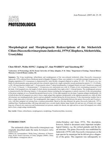 Morphological and Morphogenetic Redescriptions of the Stichotrich ...
