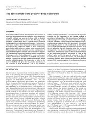 A B - Development - The Company of Biologists