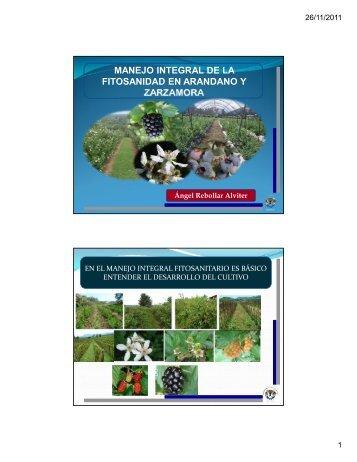 manejo integral de la fitosanidad en arandano y zarzamora - Cofupro
