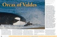 Orcas of Valdes - X-Ray Magazine