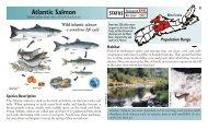 Atlantic Salmon - Species at Risk