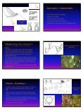 Ephemoptera and Odonata - Page 2